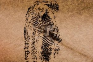 Forensic Pattern Recognition Evidence-An Educational Module